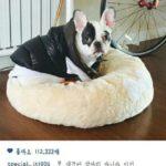 Tidak-Disangka,-Ternyata-Leeteuk-Super-Junior-Juga-Pernah-Digigit-Anjing-Siwon.