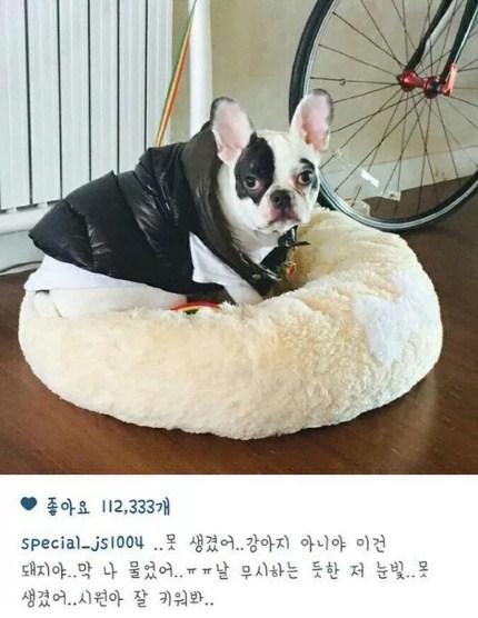 Tidak-Disangka,-Ternyata-Leeteuk-Super-Junior-Juga-Pernah-Digigit-Anjing-Siwon