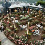 Daftar-Tempat-Wisata-Romantis-Di-Korea-Selatan-Sky-Rose-Garden