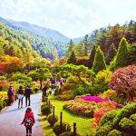 Tempat-Wisata-Di-Korea-Selatan-Saat-Musim-Gugur