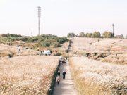 Tempat-Wisata-Di-Korea-Selatan-Saat-Musim-GugurHaneoul-(Sky)-Park
