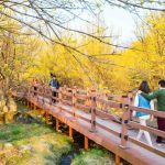 Tempat-Wisata-Di-Korea-Selatan-Saat-Musim-Semi-Incheon-Sansuyu-Village